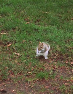 07 Squirrel (Medium)